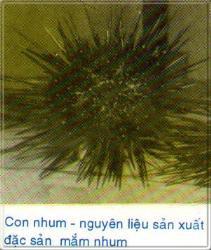 con_nhum