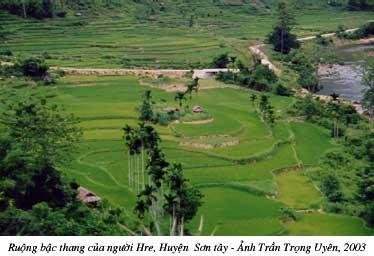 ruong_bac_thang